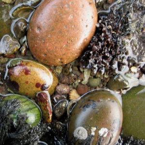 microworlds between the rocks in the beaches of Scotland